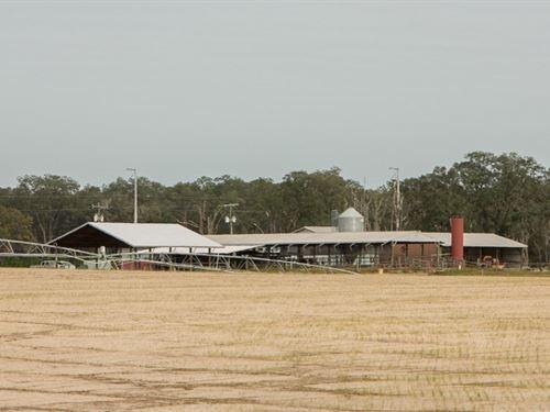 Florida Dairy : Live Oak : Suwannee County : Florida