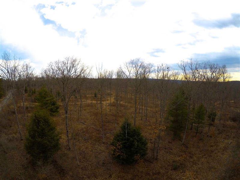 925+/- Of Timberland Acres : Beech Creek : Clinton County : Pennsylvania