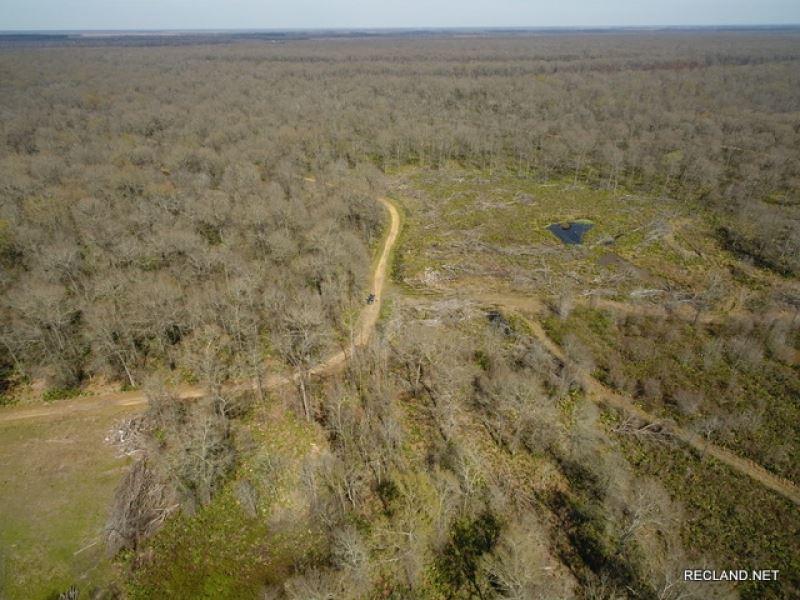 396 Ac, Hunting & Camp Site Wi : Newellton : Tensas Parish : Louisiana