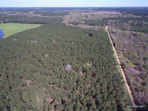 237 Ac - Managed Timberland : Mount Holly : Union County : Arkansas