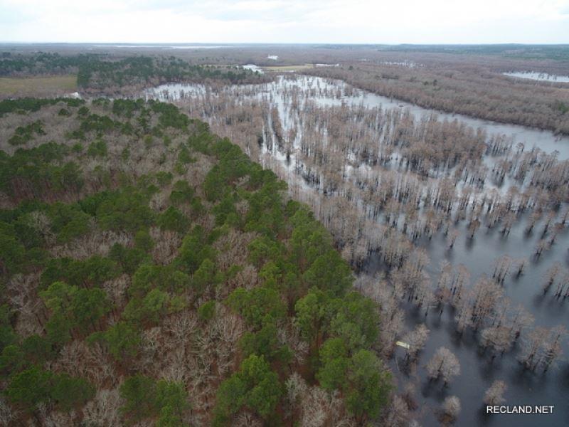 100 Ac, Timber & Hunting With : Winnfield : Winn Parish : Louisiana