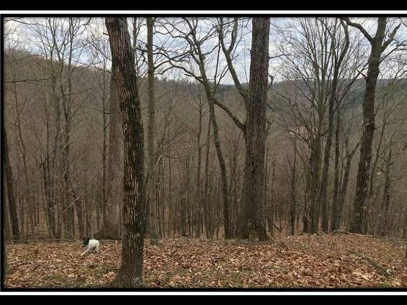 Paradise Ridge On Wayne : Patriot : Gallia County : Ohio