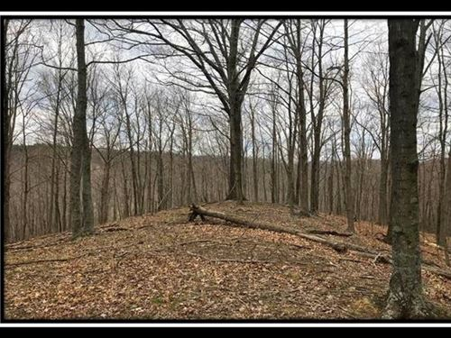 23 Ac Paradise Valley On Wayne : Patriot : Gallia County : Ohio