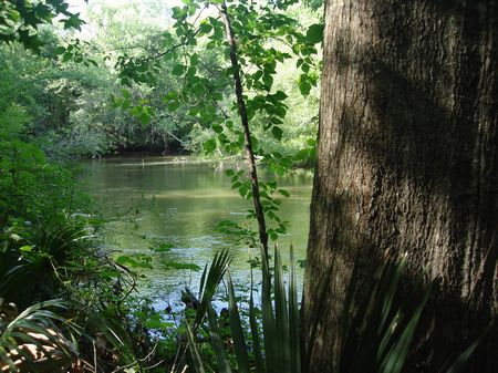264 Acres With Cabin On The River : Millen : Jenkins County : Georgia
