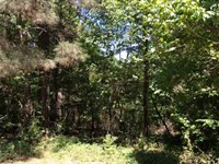 10 Acres Heavily Wooded, Nacogdoch : Nacogdoches : Nacogdoches County : Texas