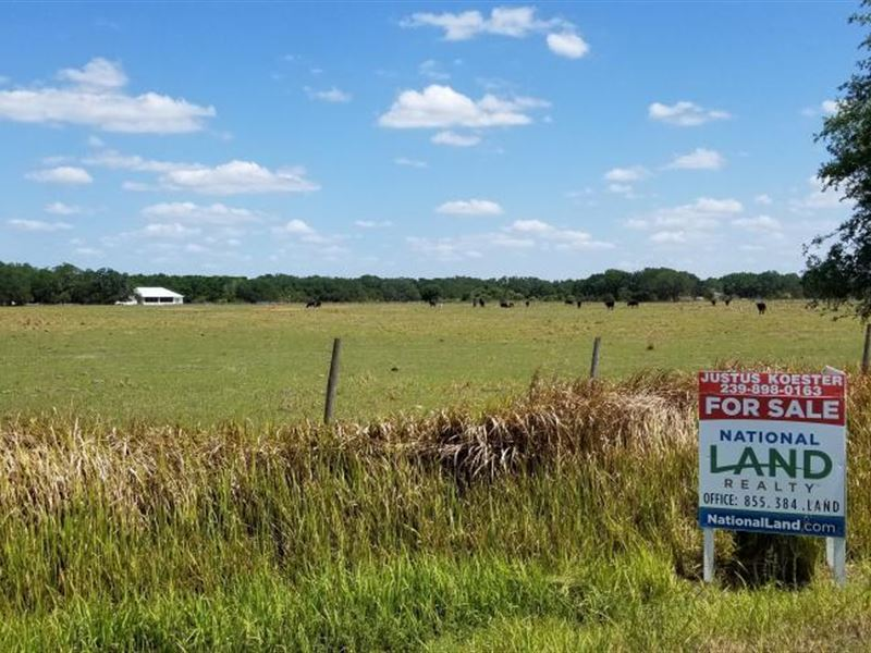 Country Estate Pastureland Paradise : Arcadia : Desoto County : Florida