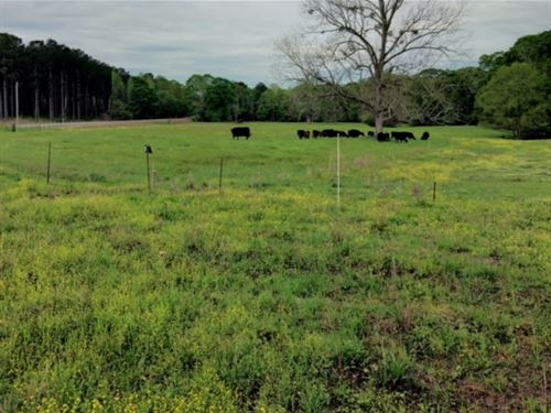 50 Acres In Simpson County : Braxton : Simpson County : Mississippi