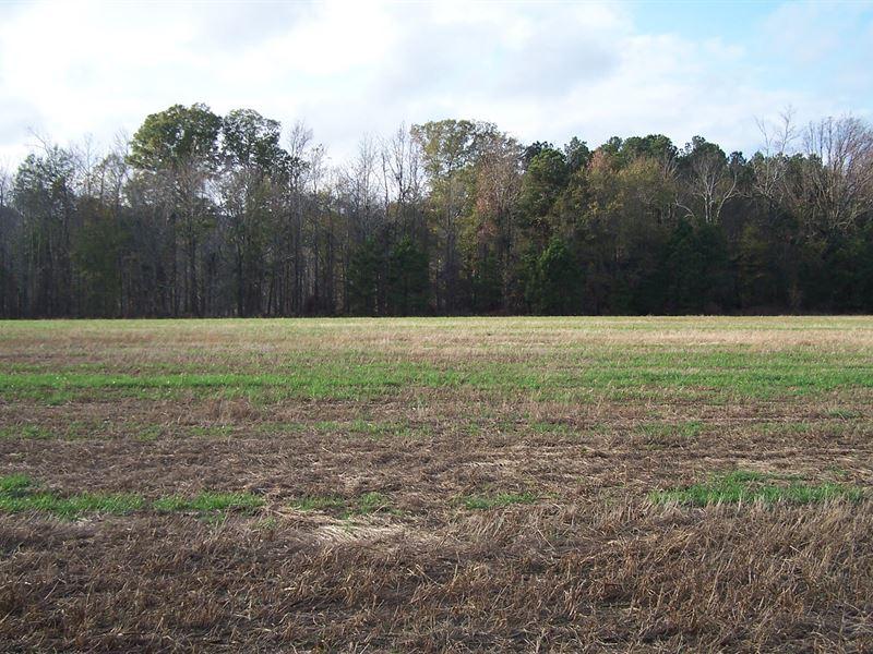 Homesite In Quiet, Rural Setting : Louisville : Jefferson County : Georgia