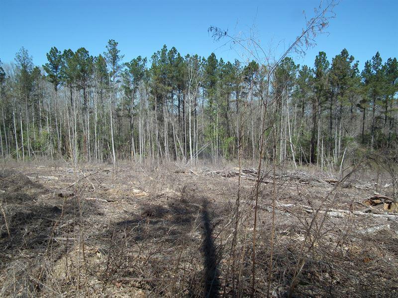 Chickasawhay Creek : Dekalb : Kemper County : Mississippi