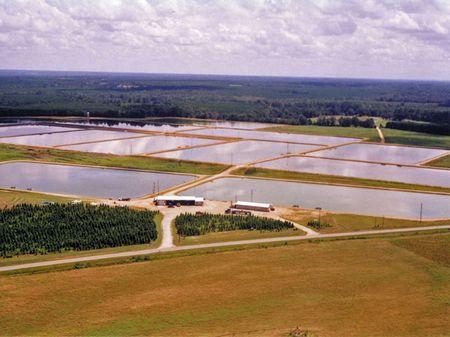 Price Reduced 194.6 Acre Fish Farm : Louisville : Jefferson County : Georgia