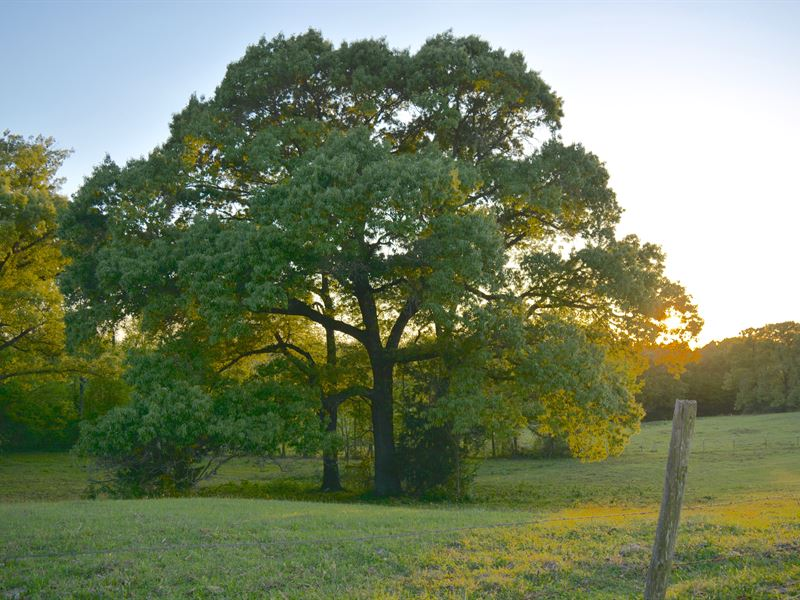Beautiful 91+ Acres, Wood County : Scroggins : Wood County : Texas
