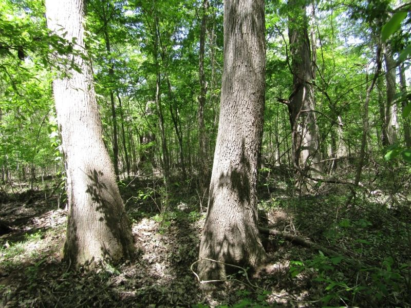 104 Acres In Rankin County, Ms : Pearl : Rankin County : Mississippi