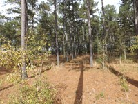 200 Acres Of Planted Pines : Shorterville : Henry County : Alabama