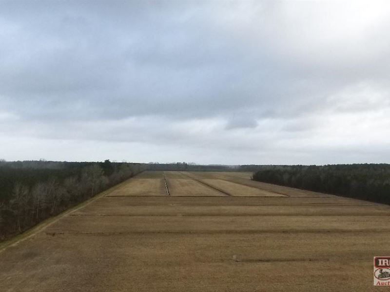 185 +/- Acres Cropland And Timber : Oriental : Pamlico County : North Carolina