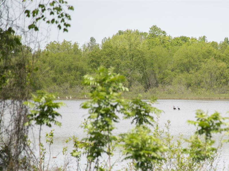18 Acre Pond : Grapeland : Houston County : Texas
