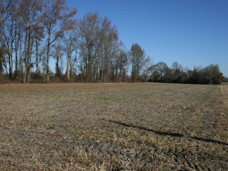 Richards Family Farm : Lucama : Wilson County : North Carolina