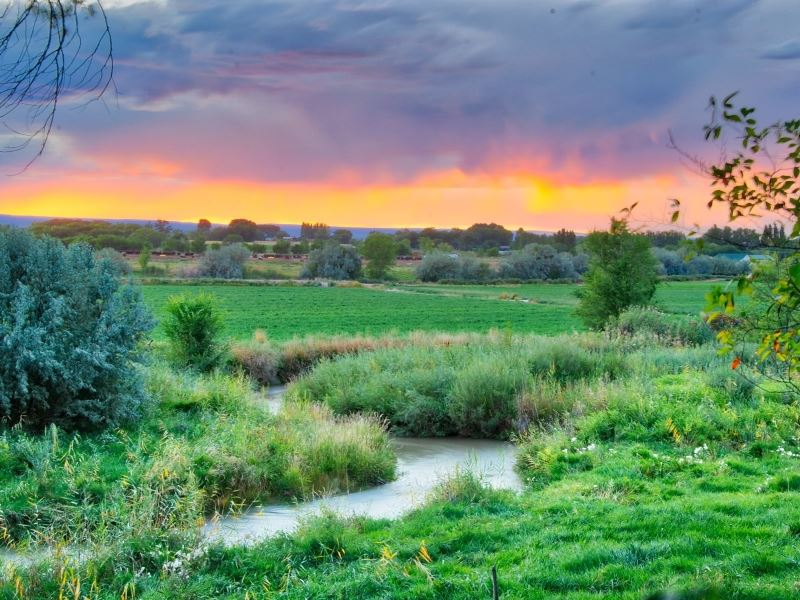 Water Rich Cattle Ranch : Olathe : Montrose County : Colorado