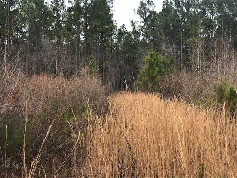 Great Timber And Recreational Tract : Bonifay : Washington County : Florida