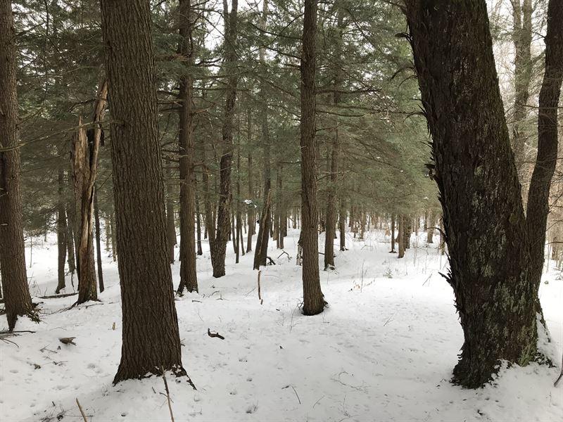 Black River Area - Adirondacks : Forestport : New York County : New York