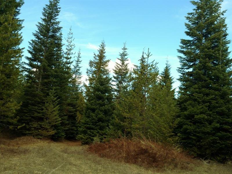 Land Of Eldorado : Priest River : Bonner County : Idaho