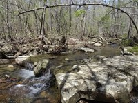 40 Acre Deer & Turkey Paradise : Concord : Cleburne County : Arkansas