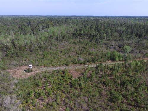 1317 Acres - Madison, Fl : Madison : Polk County : Florida