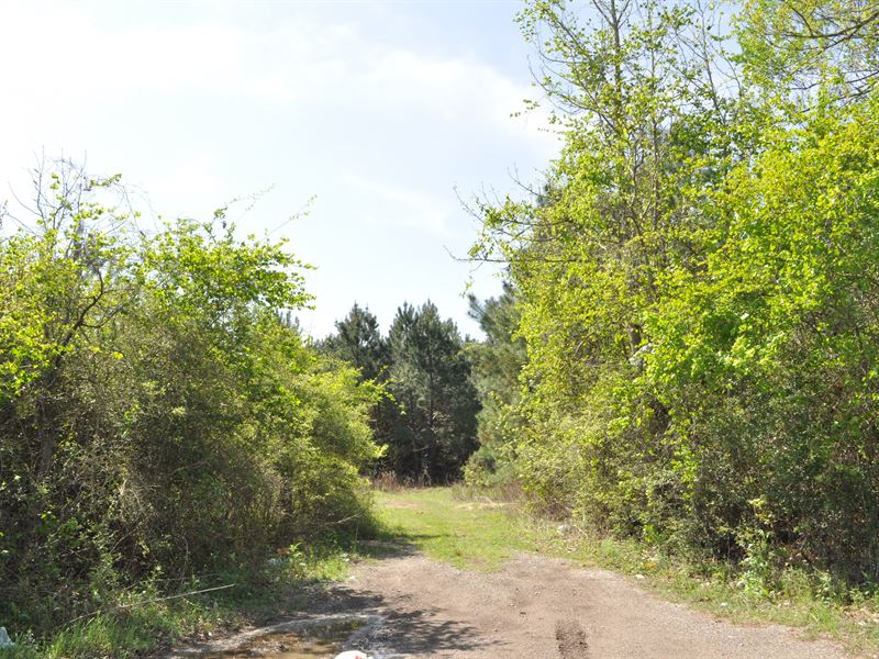 Ten Mile Creek 974 Ac : Pine Forest : Orange County : Texas