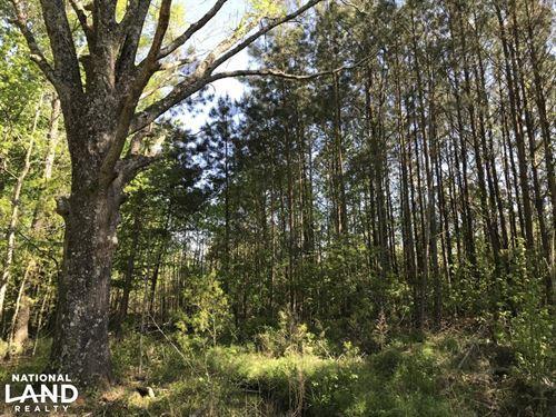 Lynchburg Hunting & Recreational Pr : Lynchburg : Lee County : South Carolina