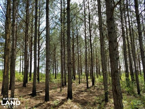 Henry/Barbour Timber Investment : Edwin : Henry County : Alabama