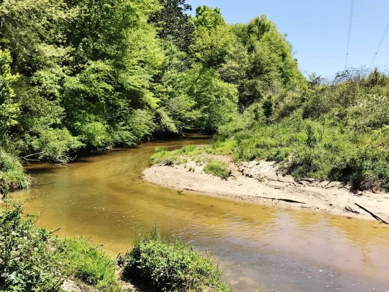 Pasture Hunting Land With Creek For : Tylertown : Walthall County : Mississippi
