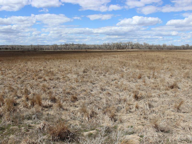 Sw Nebraska Pheasant Haven : Trenton : Hitchcock County : Nebraska
