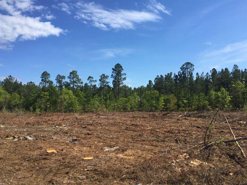 Delray Drive East Tract : North : Orangeburg County : South Carolina