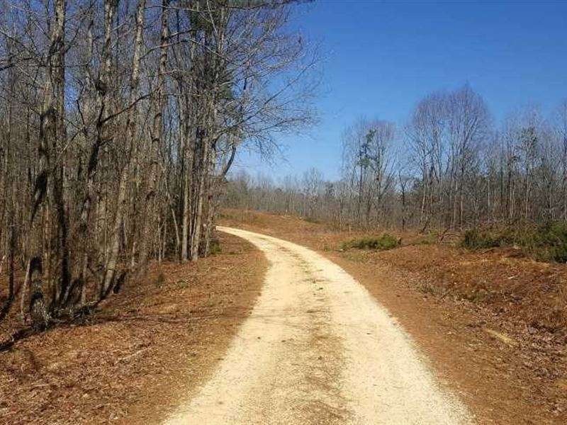 4,118 Acre Great Palestine Land Tr : Henderson : Chester County : Tennessee