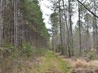 Hunter's Paradise : Rocky Point : Pender County : North Carolina