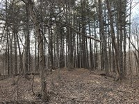 Beach Rd - 37 Acres : Glouster : Morgan County : Ohio