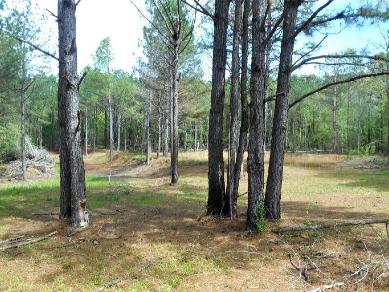 70 Acres In Leake County : Walnut : Leake County : Mississippi