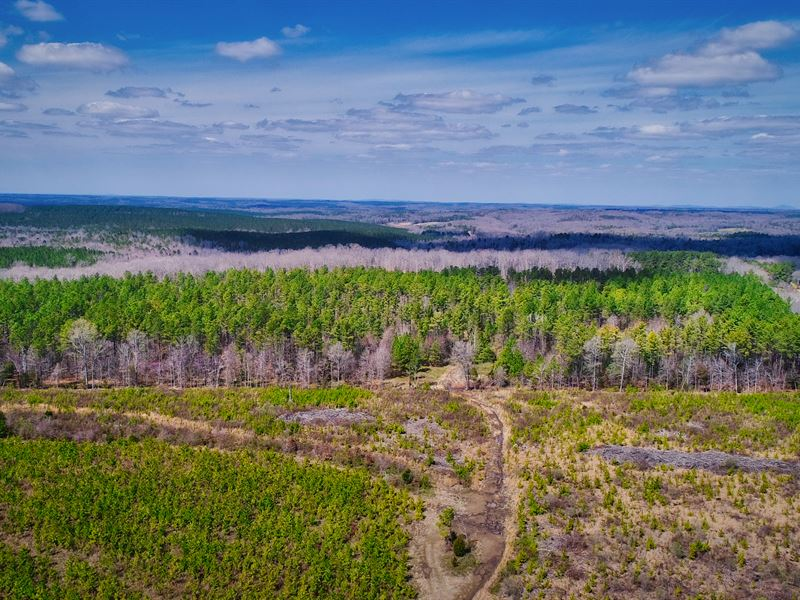 47 Acres Of Mature Pine In McConnel : McConnells : York County : South Carolina