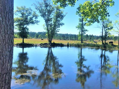 Double Ponds Farm : Hortense : Brantley County : Georgia