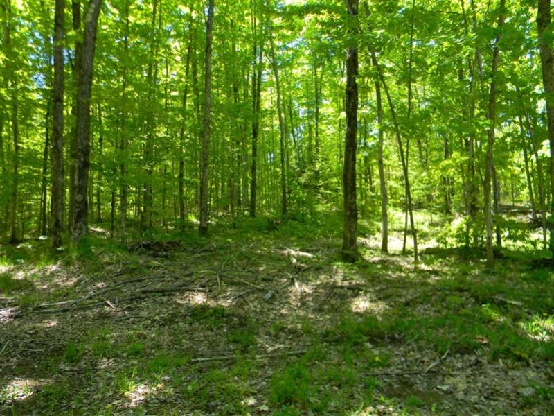 Rauhala Road, Lots 4 & 5 : Houghton : Houghton County : Michigan