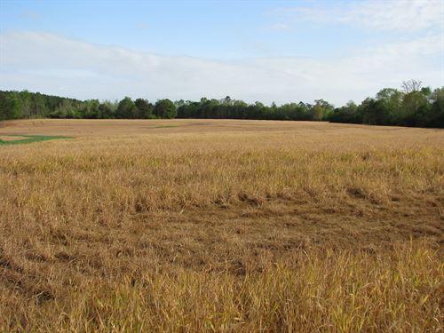 Very Nice Farm : Monroeville : Monroe County : Alabama