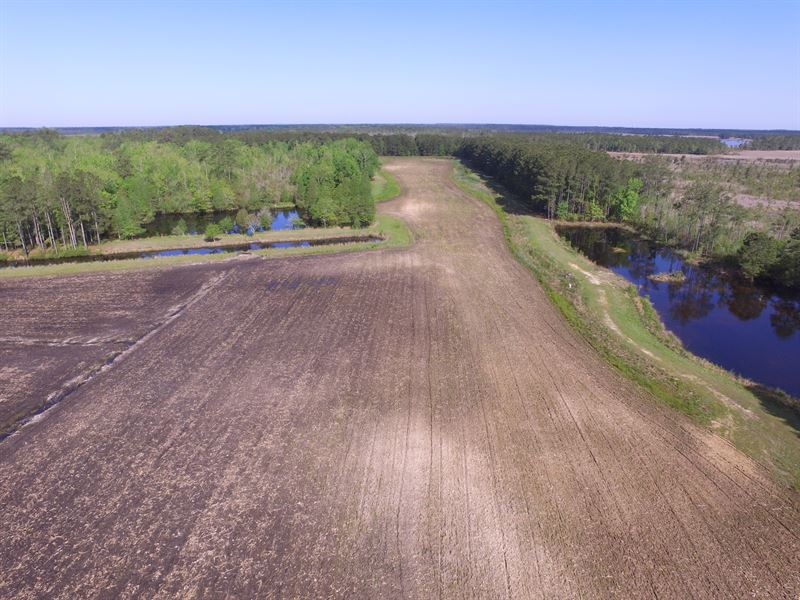 Hunting Tract For Sale Belhaven Nc : Belhaven : Beaufort County : North Carolina