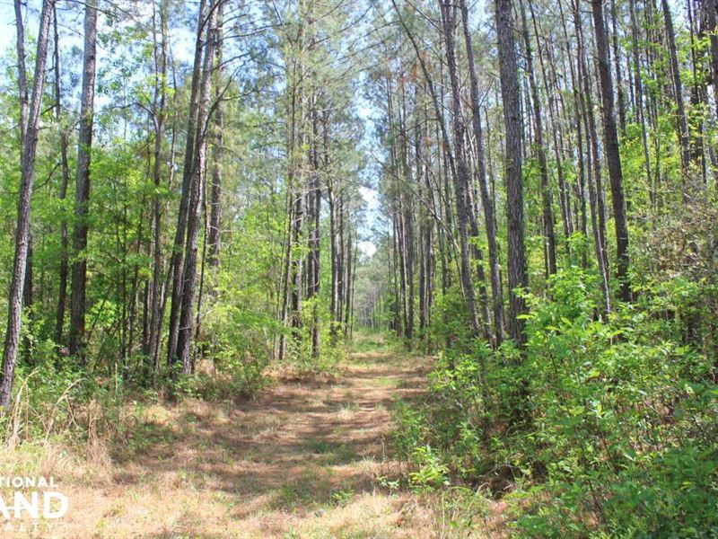 Shulerville 42 Acres : Shulerville : Berkeley County : South Carolina