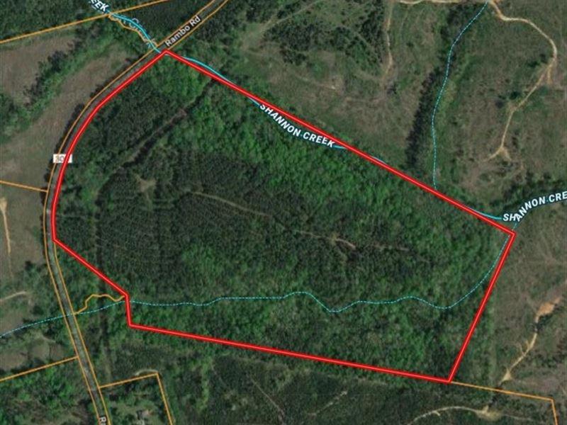 Nice Stand Of Timber, Creeks : Blackstock : Chester County : South Carolina