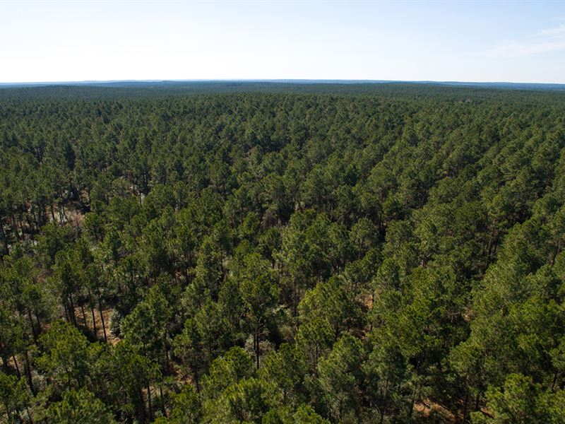 9753 Ac Trinity Forest : Groveton : Trinity County : Texas