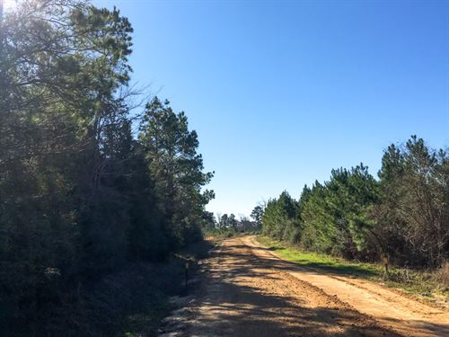 143 Ac Bold Springs Ray Marsh Road : Livingston : Polk County : Texas