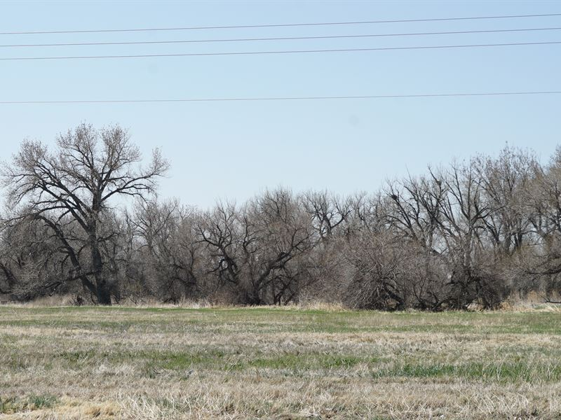 8 Acres On The South Platte : Kersey : Weld County : Colorado