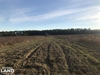Buck Haven Farmland Tract : Bradley : Escambia County : Alabama