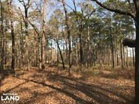 Miller Creek Conecuh NF Hunting Tra : Bradley : Escambia County : Alabama