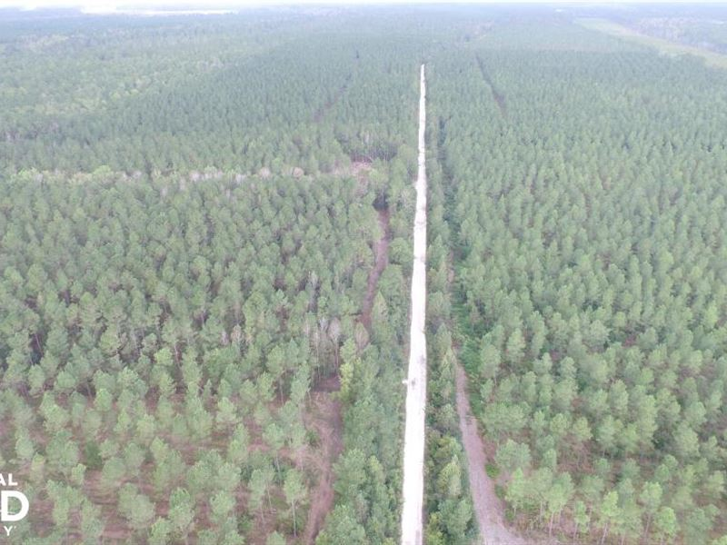 54 Acre Burgaw Hunting : Burgaw : Pender County : North Carolina
