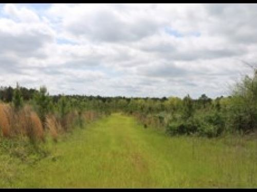 236.9 Acres In Attala County, Ms : West : Attala County : Mississippi
